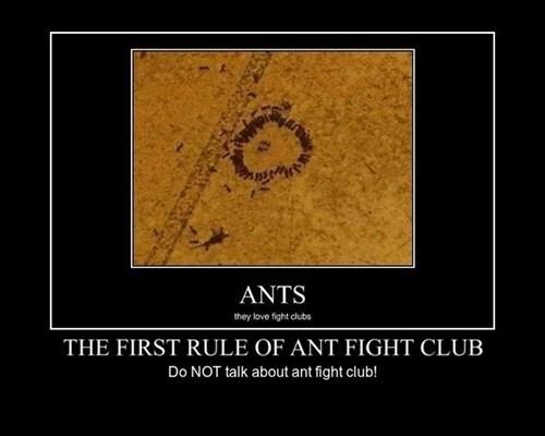fight club funny wtf - 8229118720