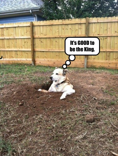 dogs digging hole king