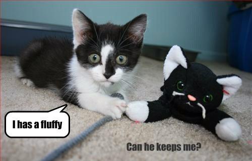 kitten pets cute - 8229308160
