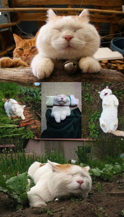 Cats,cute,gardening,relaxed