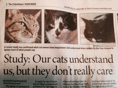 Cats news - 8229369856