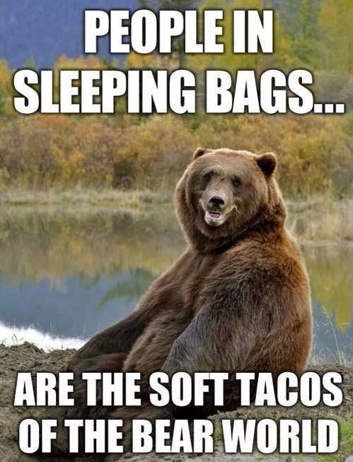 bears camping puns tacos - 8229427712