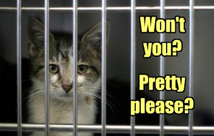adopt Cats cute shelter - 8229459200