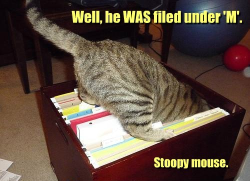 Cats,files,mice,funny