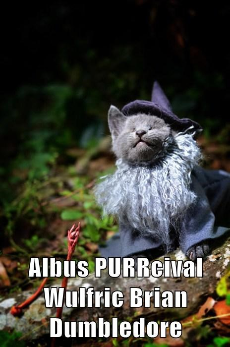 Even Wizards Need Cats