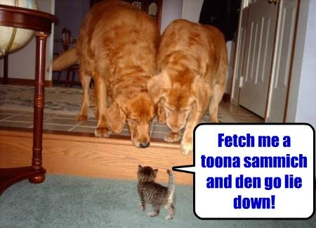 Fetch me a toona sammich and den go lie down!