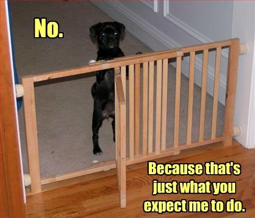 cute dogs obey - 8230595584