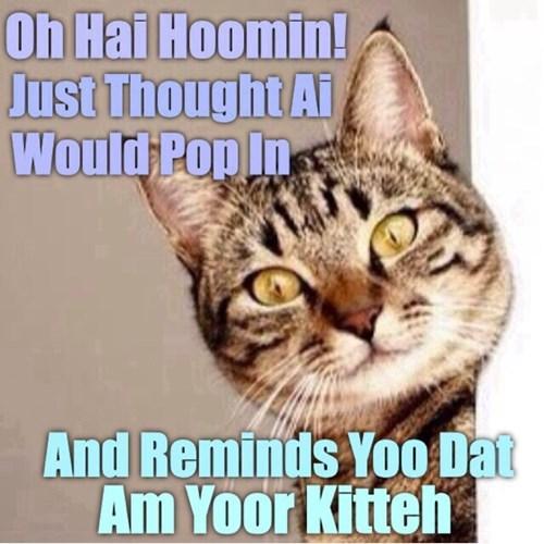 Cats cute noms - 8231710720