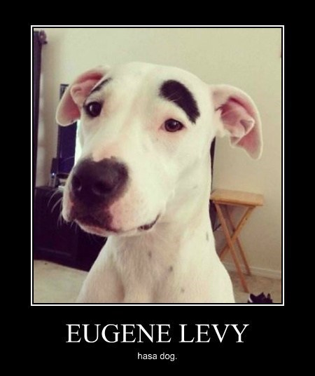 Eugene Levy,dogs,eyebrows,huge,wtf