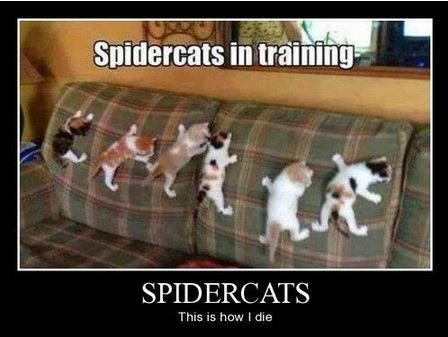 Cats funny wtf spider - 8231753472
