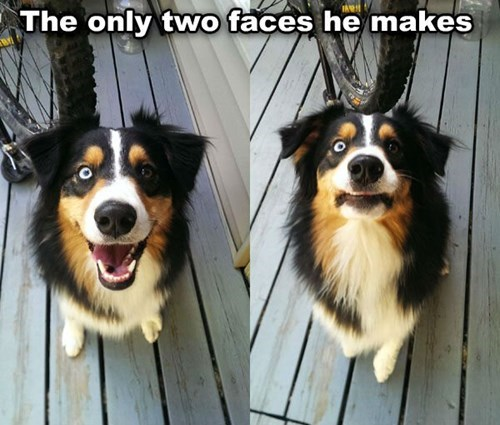 dogs funny faces - 8232153088