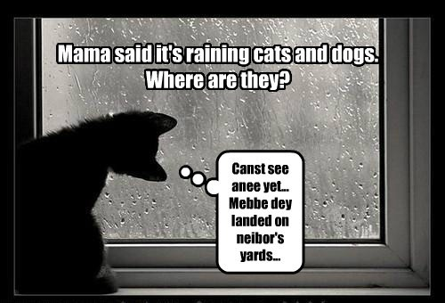 Mama said it's raining cats and dogs. Where are they? Canst see anee yet... Mebbe dey landed on neibor's yards...