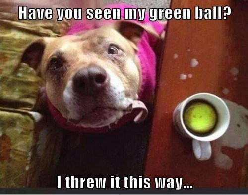 balls,dogs,coffee