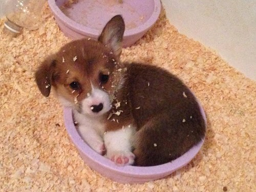 puppies cute bowl squee - 8232900608