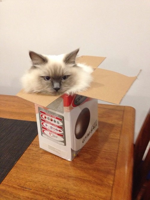 box cute if i fits i sits Cats - 8232901888