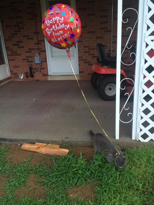 Balloons outside explorer Cats - 8232907264
