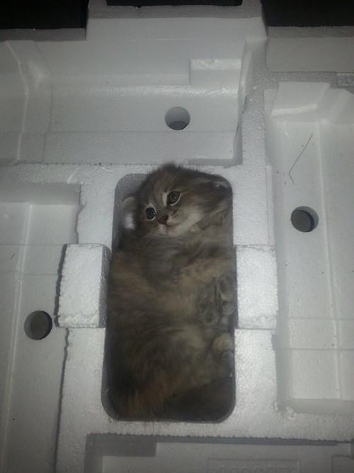 Cats if i fits i sits - 8232942848