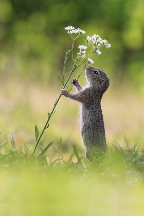 cute,flowers,squirrel