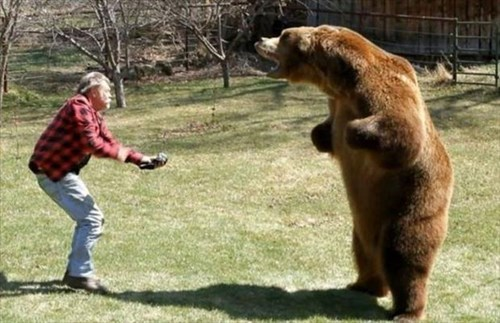 bears caption contest funny puns - 8233027072