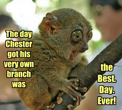 cute,branch,excited,puns