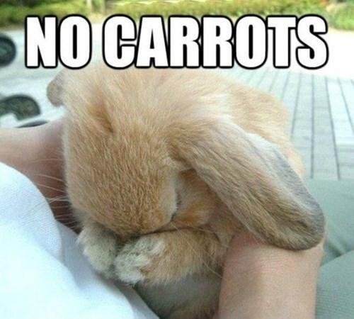 bunnies carrots puns - 8233105920