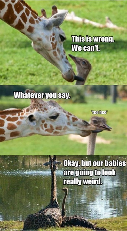 cute,giraffes,ostrich,love