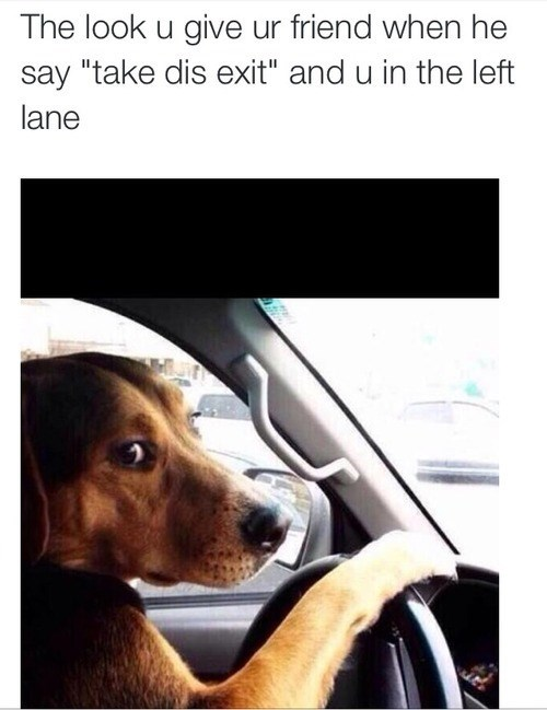 dogs driving reaction failbook g rated - 8233265664