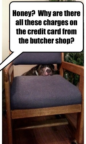 dogs,credit card,hiding,guilty