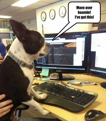 computers dogs funny work - 8233869056