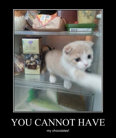 Cats,cute,fridge,chocolate,funny