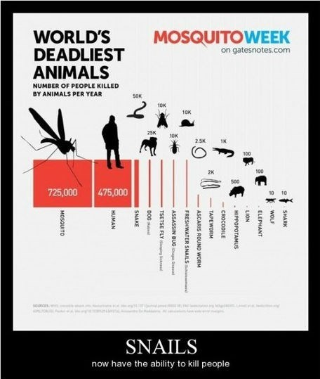 animals deadly mosquito - 8234069760