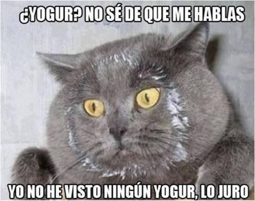 Memes animales gatos bromas - 8234234624