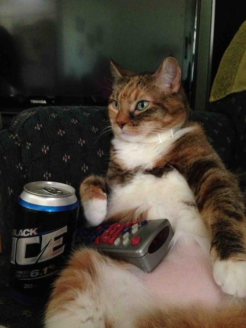 beer,Cats,netflix