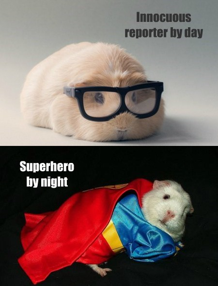 disguise,guinea pigs,superman