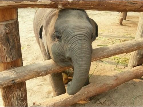 Babies cute elephants - 8234318592