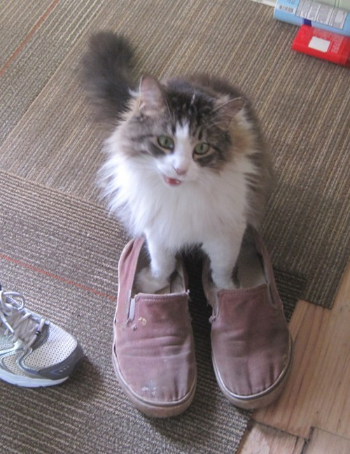 Cats cute slippers