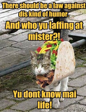 Cats,costume,funny,tacos