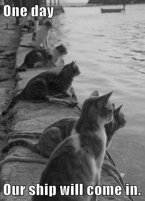 Cats ships - 8234524672