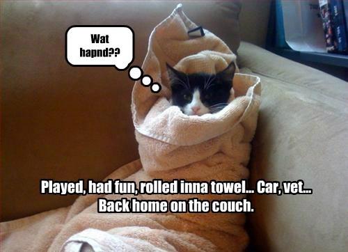 cute kitten tired towels - 8234738176