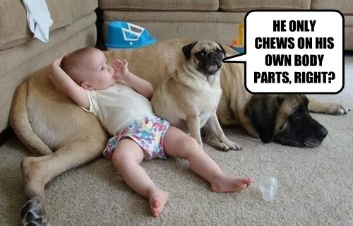 Babies cute dogs funny - 8234739968