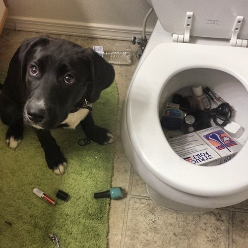 dogs toilets