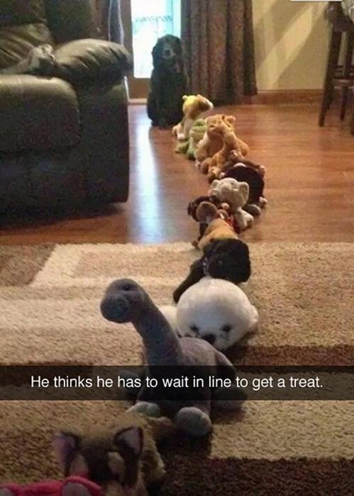 dogs dog treats - 8235211520