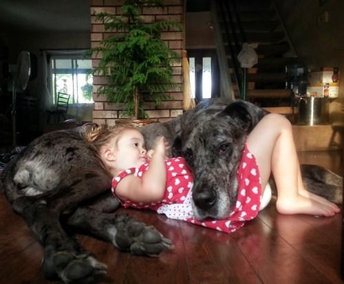 dogs kids naps - 8235339520