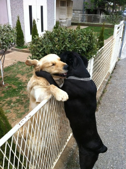 cute dogs hugs - 8235342848