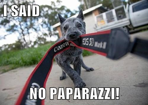 dogs,pictures,paparazzi