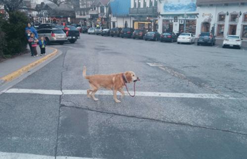 fotos animales perros curiosidades - 8235362560