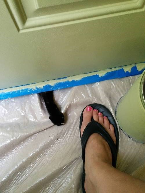 Cats help painting - 8235365120