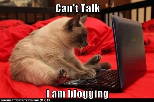 Cats blogging laptop - 8235404032