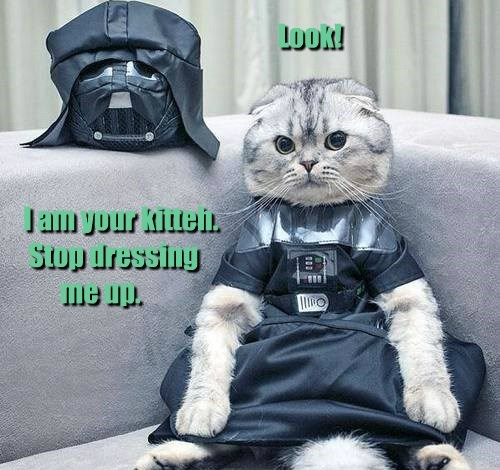 Cats,costume,darth vader