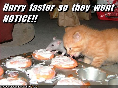 Cats,cookies,kitten,guilty,rats